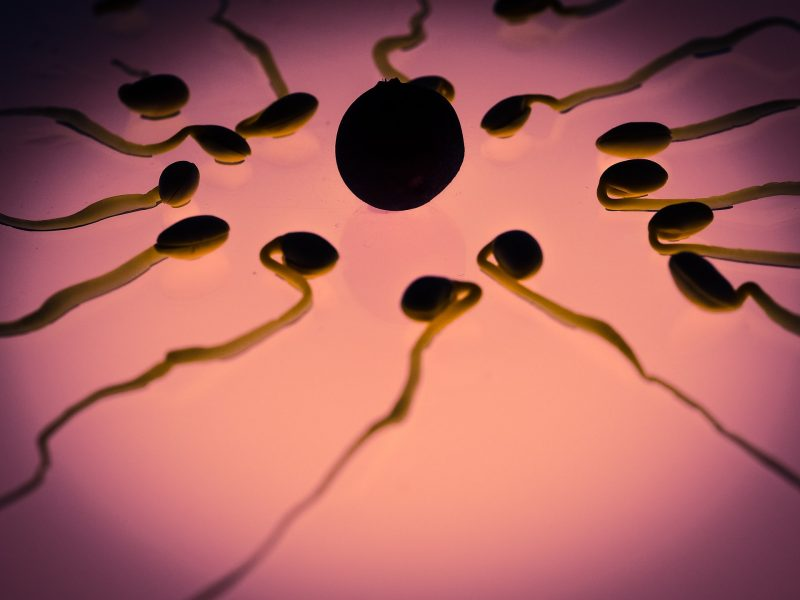 Plodnost kod muškaraca